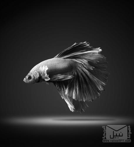 صور مذهلة للأسماك المتلونة