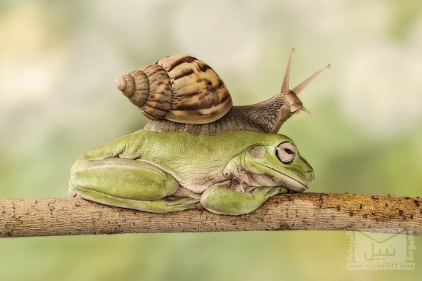 frog04
