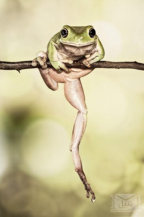 frog05