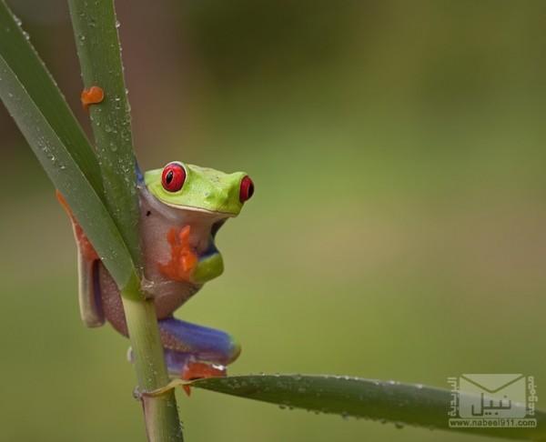 frog08